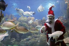 Santa Clause Feeding Fishes. At aquarium. (note: image is slightly grainy due to low light condition Stock Photos