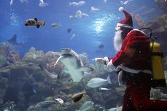 Santa Clause Feeding Shark Stock Photography