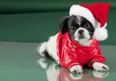Santa Clous - cão Fotografia de Stock