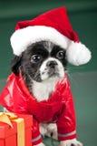 Santa Clous - hund Royaltyfria Foton