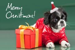 Santa Clous - shih tzu Stockfoto