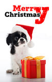 Santa Clous - shih tzu Stock Images