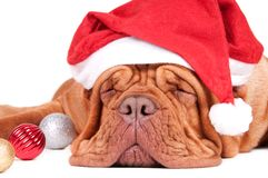 When is Santa coming? Royalty Free Stock Photography