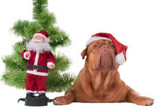 Santa is coming Royalty Free Stock Images