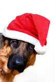 Santa Is Coming. A dog wearing a Santa Claus hat Stock Photo