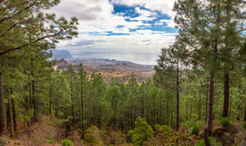 Santa Cruz de Tenerife through Pines Stock Photos