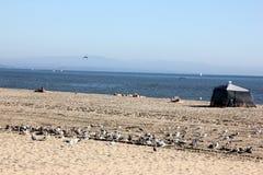Santa Cruz Harbor Beach, Kalifornien, USA stockfotos