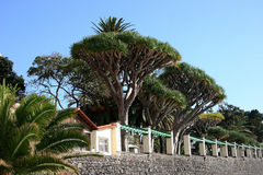 Santa Cruz, Madeira Lizenzfreie Stockfotos