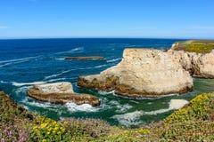 Santa Cruz Shark Fin Cove con la flor Imagenes de archivo