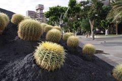 Santa Cruz in Tenerife. Cactus are growing on the roof of a building in Santa Cruz de Tenerife royalty free stock image