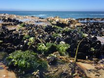 Santa Cruz Royalty Free Stock Photo