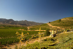 Santa Cruz vineyard, Chile. View from the Santa Cruz vineyard in Santa Cruz valley Chile royalty free stock images