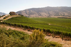 Santa Cruz vineyard, Chile Royalty Free Stock Image