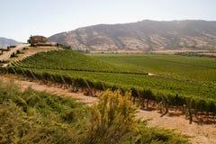 Santa Cruz vineyard, Chile. View from the Santa Cruz vineyard in Santa Cruz valley Chile royalty free stock image
