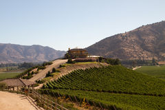 Santa Cruz vineyard, Chile. View from the Santa Cruz vineyard in Santa Cruz valley Chile royalty free stock photo