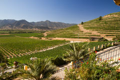 Santa Cruz vineyard, Chile. View from the Santa Cruz vineyard in Santa Cruz valley Chile stock image