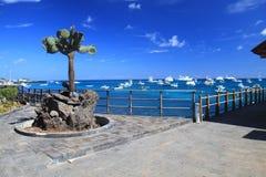 Santa- Cruzinsel, Galapagos stockbild