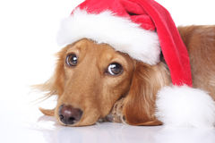 Santa dog Royalty Free Stock Image