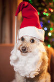 Santa dog. Cute dog with santa bear and hat, christmas lights on background Stock Photos