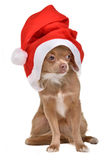 Santa Dog Stock Photography