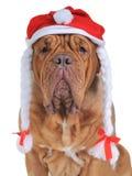 Santa Dog Stock Image