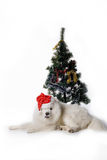 Santa dog. Santa-dog laying under christmas tree Royalty Free Stock Photography