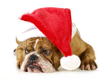 Santa dog Stock Image