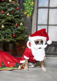 Santa Dog Royalty Free Stock Photos