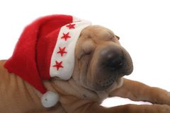 Santa dog. A shaprpei dog wearing santa hat Stock Photo