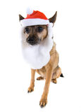 Santa dog Stock Photo