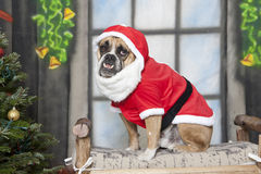 Santa Dog on a bench up close Stock Image