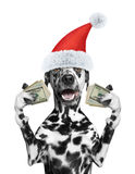 Santa dog holds in its paws a lot of money Royalty Free Stock Photos