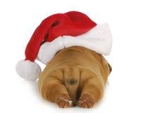 Santa dog Royalty Free Stock Photo