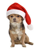 Santa dog with red hat Stock Photos