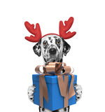 Santa dog in reindeer antlers with new year gift. Isolated on white stock photo