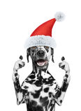 Santa dog showing thumb up and welcomes Royalty Free Stock Photography