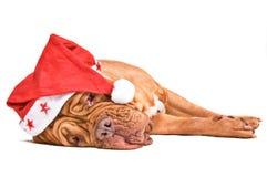 Santa Dog Tired Stock Photo