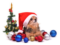 Santa Dog With Christmas Decorations Royalty Free Stock Photography