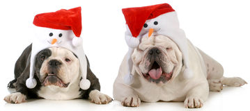Santa dogs Stock Photography