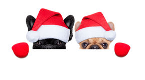 Santa dogs Stock Photos
