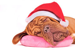 Santa Dreams Royalty Free Stock Photography
