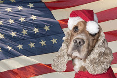 A santa dressed puppy dog christmas xmas Royalty Free Stock Photo