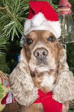 A santa dressed puppy dog christmas xmas Stock Image