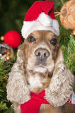 A santa dressed puppy dog christmas xmas Royalty Free Stock Image
