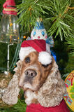A santa dressed puppy dog christmas xmas Royalty Free Stock Photography