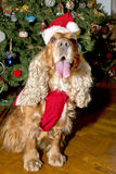 A santa dressed puppy dog christmas xmas Stock Images