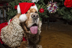 Santa dressed puppy dog christmas xmas Stock Photography