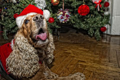 A santa dressed puppy dog christmas xmas Stock Photos