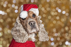Santa dressed puppy dog christmas xmas Stock Image