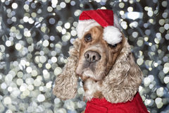 Santa dressed puppy dog christmas xmas Stock Photo